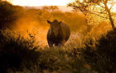 Africa Rhinoceros Running Nature HD Wallpapers