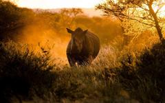 Africa Rhinoceros Running Nature HD Wallpapers