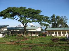 burundi tree