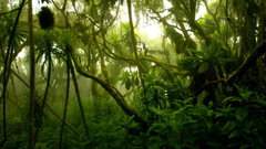 Congo Plans to Open Rainforest to Loggers