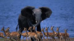 Botswana Wallpapers