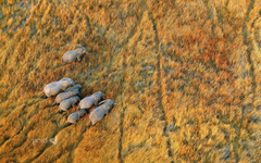 nature Landscape Plains Animals Wildlife Elephants Aerial