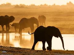 Elephants Photo Chobe Reserve Wallpapers
