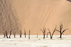Namib Tag wallpapers Meeting Namib Coastal Southern Africa Angola