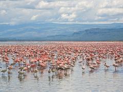 Lesser and Greater Flamingos Lake Nakuru National Park Kenya