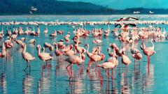 Lake Nakuru Express Tour