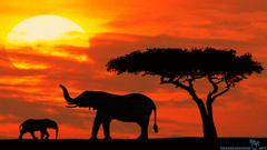 Quality Kenya Wallpapers Countries
