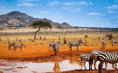 The Best Safari Booking in Kenya wallpapers