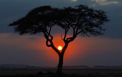 africa night tree sunset kenya landscape savannah sun HD wallpapers
