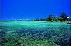 Beaches Blue Tree Mauritius Beach Sea Oceans Coral HD Wallpapers