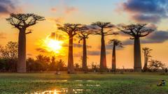 Madagascar Holidays Madagascar travel with the experts