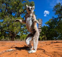Madagascar SouthEast Coast African Huge Island Nation