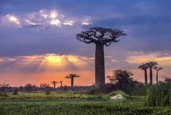 Embrace Madagascar this October on an Exclusive Private Plane