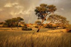 namibia africa savannah grass tree HD wallpapers