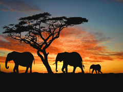 Discover Namibia in five safaris