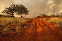 namibia africa hills grass tree sand road HD wallpapers