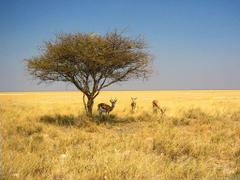 Namibia Wallpapers Desert Dunes Zebra Etosha National Park