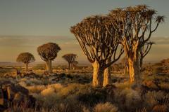 Namibia Africa Nature Landscape Trees Savannah Shrubs