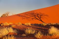 namibia africa namib desert sky sunset shadow tree bush sand dune