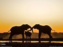 Elephant Trio Namibia