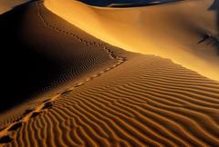 Desert Tag wallpapers Desert Namibia Namib Africa Sahara Picture