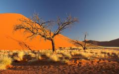 namibia africa namib desert sky dune sand tree bush HD wallpapers