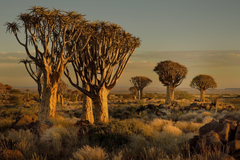 namibia africa sunset tree stones grass HD wallpapers