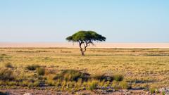 nature Namibia Trees Landscape Savannah National park Africa