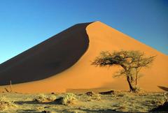 Deserts Desert Acacia Namib Africa Nature Dunes Sand Namibia Tree