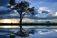 Lake Africa Water Tanzania Blue Tree Landscape Lake Wallpapers