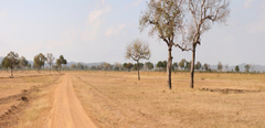 Mikumi National Park Tanzania Sky Dirt Nature Trees Field Panorama
