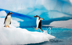 Wallpapers Tagged With ANTARCTICA