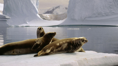 Antarctica the south pole seals wallpapers