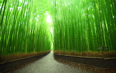 Bamboo Forest HD Wallpapers