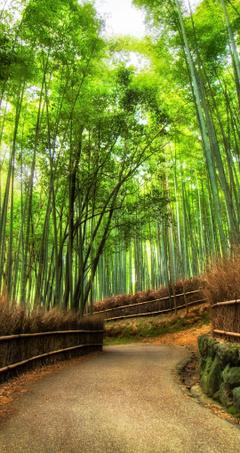 Bamboo Grove Wallpapers New Arashiyama Bamboo Grove by Ldmarin On