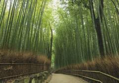 Bamboo Grove Wallpapers Beautiful Arashiyama Bamboo forest by Timgrey