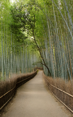 Jeffrey Friedl s Blog Mike Bennett s Last Day in Kyoto Arashiyama