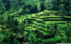 Bali Indonesia HD desktop wallpapers High Definition