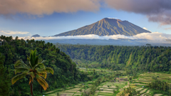 Wallpapers Bali palms trees field mountain clouds 5k Nature