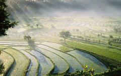 Bali Rice Fields wallpapers