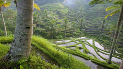 Rice Indonesia bali wallpapers