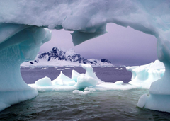 Displaying animals of antartica Pictures on Animal Picture Society