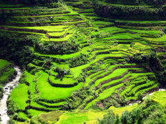 Banaue Rice Terraces Wallpapers