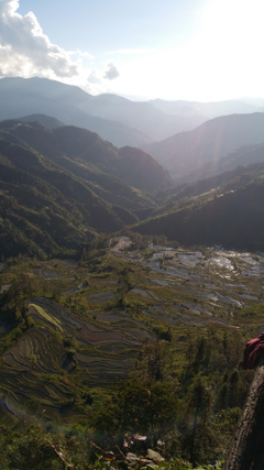 Best 500 Banaue Rice Terraces Banaue Philippines Pictures HD