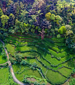 Banaue Rice Terraces Philippines Stock Photo