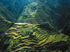 Stairways Heaven Banaue Rice Terraces Rerrces Mountains Green