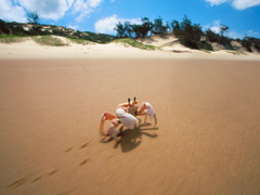 Crab Bazaruto Island Mozambique Wallpapers
