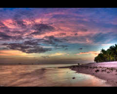 Bohol and Puerto Princesa Explored