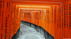 Fushimi Inari Taisha Kyoto Japan 4K HD Desktop Wallpapers for 4K