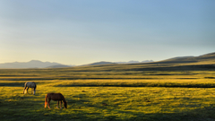 horse kyrgyzstan song kul plains Wallpapers HD Desktop and Mobile